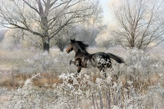 Bay stallion Royalty Free Stock Image