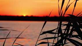 Bay. Sunset. Grass stock footage