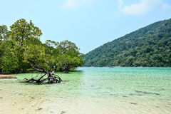 The bay of Surin island in Andaman Stock Images