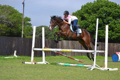 Bay Thoroughbred Jumping Royalty Free Stock Photos