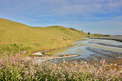 Springtime at Coyote Hills Regional Park, San Francisco East Bay, California, USA. San Francisco East Bay in Springtime Royalty Free Stock Photo