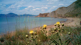 Bay with yellow flowers, Black sea, Crimea Stock Photography