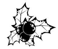 Baya blanco y negro del acebo Imagen de archivo libre de regalías