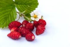 Baya de las fresas en el fondo blanco Foto de archivo libre de regalías