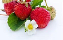 Baya de las fresas en el fondo blanco Imagenes de archivo