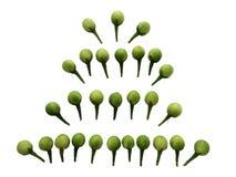 Baya de Turquía, torvum de la solanácea, berenjena del guisante fotos de archivo