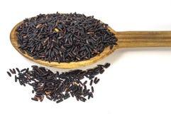 Baya del arroz Imagenes de archivo