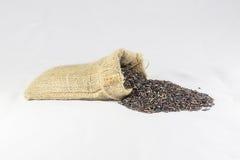 Baya del arroz foto de archivo