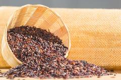 Baya del arroz Fotos de archivo