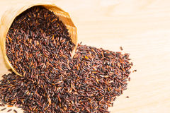 Baya del arroz Imagen de archivo libre de regalías