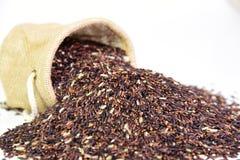 Baya del arroz del arroz Imagen de archivo libre de regalías