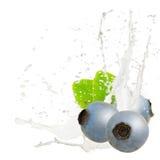 Baya del chapoteo de la leche Fotos de archivo libres de regalías