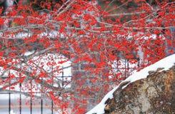 Baya del invierno en la nieve West Point Fotografía de archivo libre de regalías