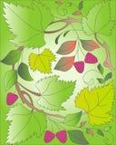 Baya del otoño Fotos de archivo