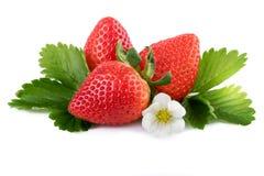 Baya orgánica de las fresas maduras con las hojas del verde aisladas en blanco Imagen de archivo libre de regalías