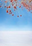 Baya roja Foto de archivo