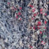 Baya roja en la hierba seca Fotos de archivo