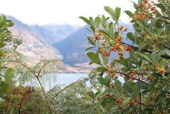 Baya salvaje con el lago y el fondo del Mountain View Fotos de archivo libres de regalías