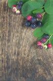 Baya salvaje del otoño foto de archivo libre de regalías