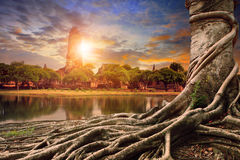 Bayan tree and sunset behind old asia pagoda Stock Images