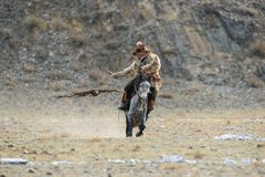 BAYAN-ULGII, MONGOLIA - OCTOBER 01, 2017:  Traditional Golden Eagle Festival. The Flying Golden Eagle And Unknown Mongolian Hunter Royalty Free Stock Image