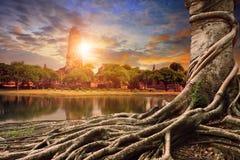 Bayanboom en zonsondergang achter de oude pagode van Azië stock afbeeldingen