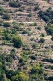 Bayarcal che faming nei terrazzi in Spagna Immagine Stock Libera da Diritti