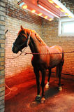 Bayard in special solarium for horses during the procedure Royalty Free Stock Photos