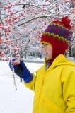Bayas 2 del invierno Imagen de archivo libre de regalías
