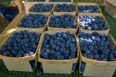 Bayas azules cultivadas en pequeñas cestas en un mercado foto de archivo libre de regalías