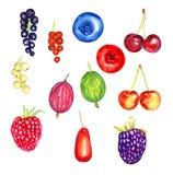 Bayas colección, pasas, arándano, arándano, grosella espinosa, frambuesa, lingonberry, zarzamora, cornejo Imagen de archivo