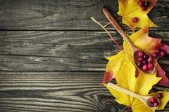 Bayas de arándanos y de una cuchara de madera en una hoja de arce Imágenes de archivo libres de regalías