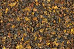 Bayas de espino cerval de mar Imagen de archivo