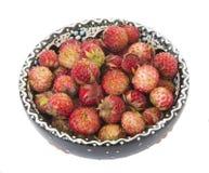 Bayas de fresas salvajes Imagen de archivo libre de regalías