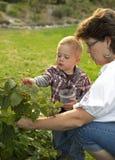 Bayas de la cosecha de la mujer y del niño Fotografía de archivo libre de regalías