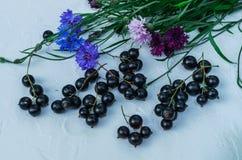 Bayas de la grosella negra con acianos Para una dieta y una saturación con las vitaminas imagen de archivo libre de regalías