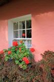 Bayas del acebo, geranios rojos y ventana bonita en la pared rosada del hogar Fotografía de archivo libre de regalías