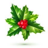 Bayas del acebo y hojas rojas realistas del verde Ornamento de la Navidad del vector aislado en el fondo blanco Fotos de archivo