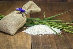 Bayas del arroz imagen de archivo