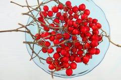 Bayas del espino con las ramas en invierno Foto de archivo libre de regalías