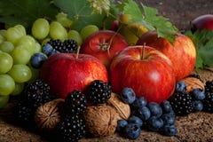 Bayas del otoño Imágenes de archivo libres de regalías