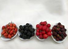 Bayas del otoño en las pequeñas bandejas Fotografía de archivo libre de regalías