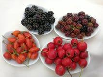 Bayas del otoño en las pequeñas bandejas Foto de archivo libre de regalías