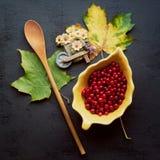 Bayas del rojo del otoño Foto de archivo libre de regalías