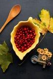 Bayas del rojo del otoño Fotografía de archivo