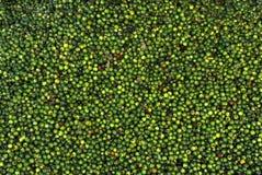 Bayas Especia-Pimienta-verdes de la pimienta fotos de archivo libres de regalías