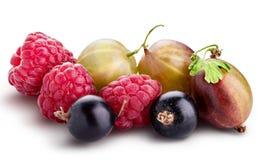 Bayas ( frambuesa, grosella negra, zarzamora, gooseberry) isolat foto de archivo libre de regalías