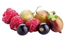Bayas ( frambuesa, grosella negra, zarzamora, gooseberry) isolat imagen de archivo libre de regalías