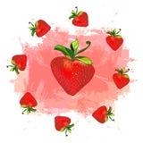 Bayas jugosas Fresas del verano Imagen del vector Fotografía de archivo