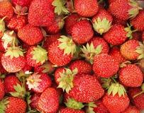 Bayas maduras de la fresa como fondo Fotos de archivo libres de regalías